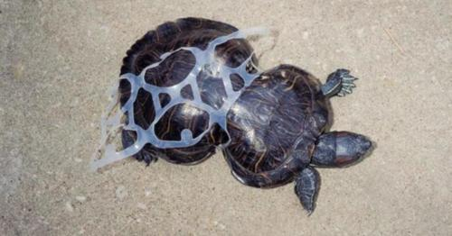 Plastic is a silent killer