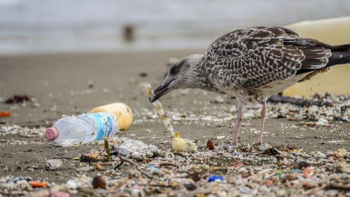 Eating plastic