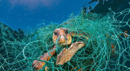 Ghost fishnets killing thousands of marine wildlife creatures
