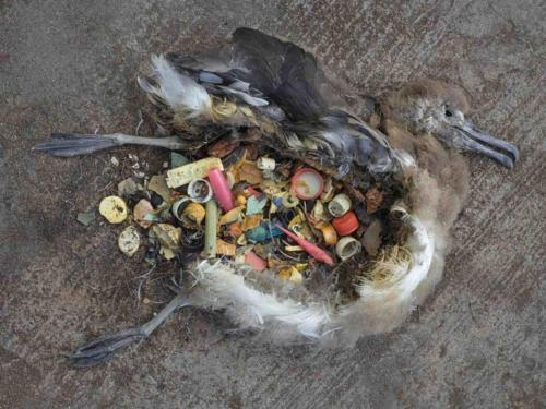 Killed by our plastic waste